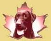 Dressage de Chiens Canada